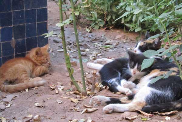 Ramadan Marokko Katzen