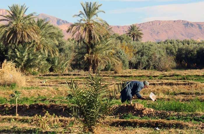 Bauer in Tinerhir, Marokko
